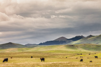 cattle ranch, ag business, EIDL